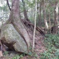熊野古道(和歌山県海南市)の写真