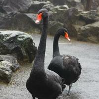伊豆シャボテン動物公園の写真