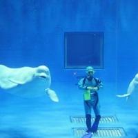 島根県立しまね海洋館 アクアスの写真