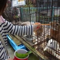 八木山動物公園 フジサキの杜の写真