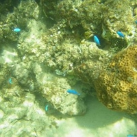 星砂の浜(西表島)の写真