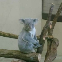 多摩動物公園の写真