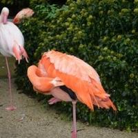 愛媛県立とべ動物園の写真
