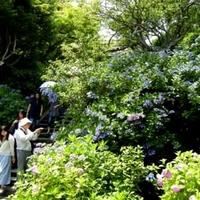 東慶寺の写真