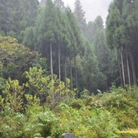三徳山三佛寺の写真