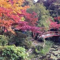 大原野神社の写真