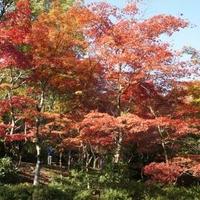 弥彦公園(もみじ谷)の写真