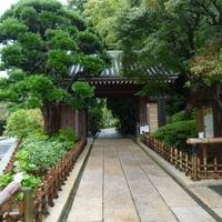 報国寺(竹寺)の写真