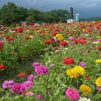 山中湖 花の都公園 清流の里 売店の写真