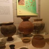明治大学考古学博物館の写真