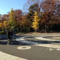 東京都立代々木公園の写真