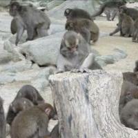高崎山自然動物園の写真