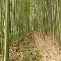 京都市洛西竹林公園の写真