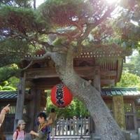長谷寺(海光山)の写真