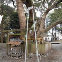 箕曲中松原神社の写真