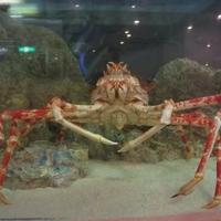板橋区立熱帯環境植物館の写真