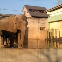 遊亀公園附属動物園の写真