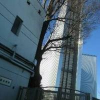 カトリック麹町 聖イグナチオ教会の写真