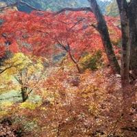 正暦寺の写真