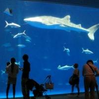 いおワールド かごしま水族館の写真