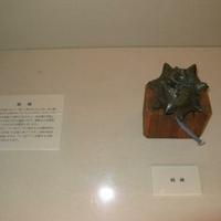 松本市立博物館の写真
