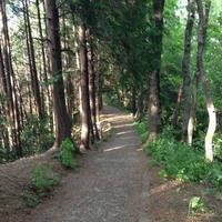 トーベ・ヤンソンあけぼのこどもの森公園の写真