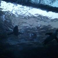 宮島水族館の写真