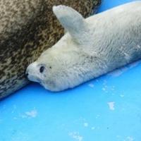 わっかりうむ ノシャップ寒流水族館の写真