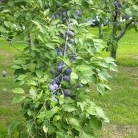 森の中の果樹園の写真
