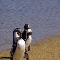 長崎ペンギン水族館の写真