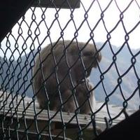 鬼怒川温泉ロープウェイの写真