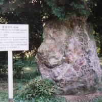東京大学大学院理学系研究科附属植物園の写真