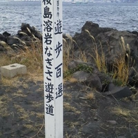 桜島溶岩なぎさ遊歩道の写真