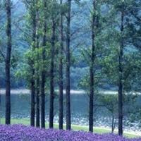 かなやま湖の写真