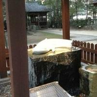 豊玉姫神社の写真