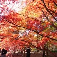 国営武蔵丘陵森林公園の写真