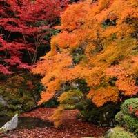 金剛輪寺(湖東三山)の写真