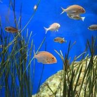 蒲郡市竹島水族館の写真