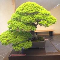 さいたま市大宮盆栽美術館の写真