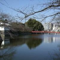 小田原城址公園の写真