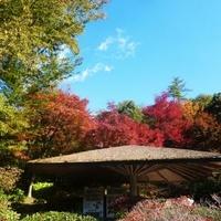愛知県緑化センター・昭和の森の写真