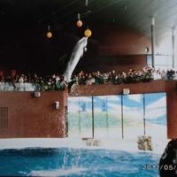 市立しものせき水族館 海響館の写真