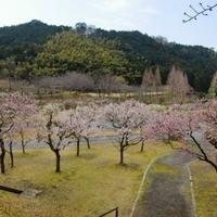 ほたるの里(本木川自然公園)の写真