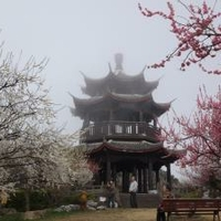 御津自然観察公園「世界の梅公園」の写真