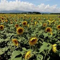 農業科学公園ルピナスパークの写真
