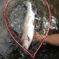 木郷滝自然釣りセンターの写真