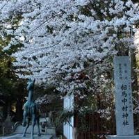 相馬中村神社の写真