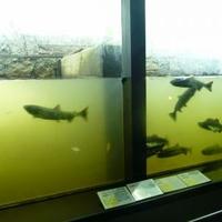 標津サーモン科学館の写真