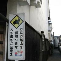 柳井(白壁の町並み)の写真