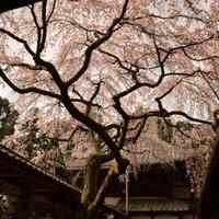 十輪寺の写真